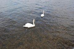 Lac Iseo Photo libre de droits
