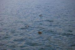 Lac Iseo Photographie stock libre de droits