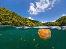 Lac jellyfish Images libres de droits