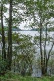 Lac karélien pendant le matin derrière les arbres Image libre de droits