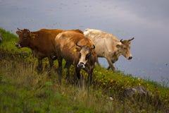 Lac Kerkini Grèce reserve Image libre de droits