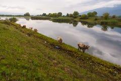 Lac Kerkini Grèce reserve Photo stock