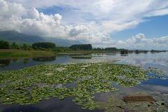 Lac Kerkini pendant le premier ressort avec le nénuphar photo libre de droits