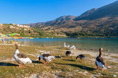 Lac Kournas. Crète, Grèce Photographie stock