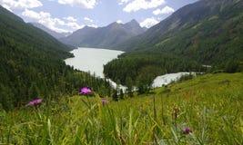 Lac Kucherlinskoe, l'Altay, Russie Image libre de droits