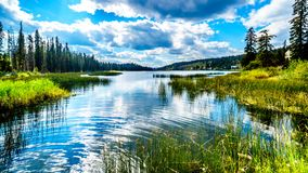 Lac Le Jeune lake near Kamloops, British Columbia, Canada. Reflection in Lac Le Jeune lake in the Okanagen near Kamloops, British Columbia, Canada royalty free stock photo