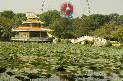 Lac lotus Images stock