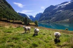 Lac Lovatnet en Norvège en Europe Images libres de droits