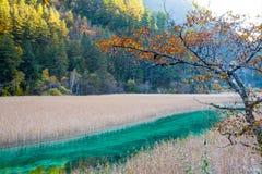 Lac lumineux de couleur de Jiuzhaigou, Chine photos stock