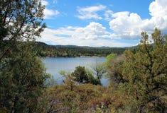 Lac lynx, Prescott, le comté de Yavapai, Arizona photos libres de droits