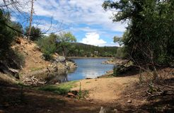 Lac lynx, Prescott, le comté de Yavapai, Arizona photo libre de droits