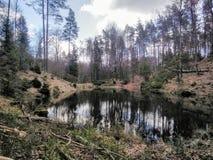 Lac magique dans la forêt images libres de droits