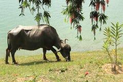 Lac Mansar, (la Kashmir). Images libres de droits