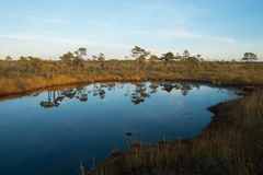 Lac marsh Photo stock