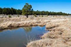 Lac Mary Landscapes Photographie stock libre de droits