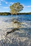 Lac McKenzie, île de Fraser Images libres de droits