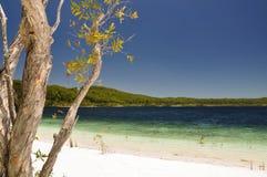 Lac McKenzie sur Fraser Island - le Queensland, Australie Photographie stock libre de droits