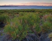 Lac mono la Californie image libre de droits