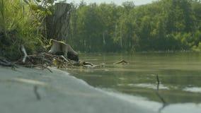 Lac mountain parmi la forêt verte de sapin dans le paysage pittoresque d'été réflexion dans l'eau clair comme de l'eau de roche clips vidéos