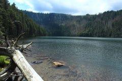 Lac noir dans la forêt de Bohème Image libre de droits