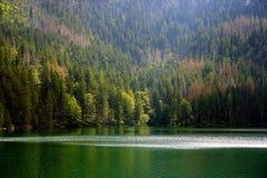 Lac noir glaciaire en parc national de Sumava image libre de droits