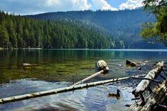 Lac noir glaciaire en parc national de Sumava photo stock