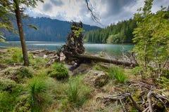 Lac noir glaciaire entouré par la forêt Image stock