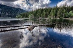 Lac noir glaciaire entouré par la forêt Images stock
