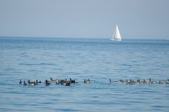 Lac Ontario photos libres de droits