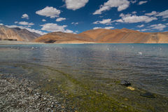 Lac Pangong Photos stock