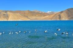 Lac Pangong dans Ladakh, Inde Images stock