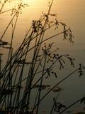Lac park de Bauman - l'Illinois photos stock