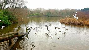 Lac park de pays de Stover Devon R-U photo stock