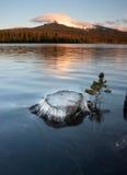 Lac partiellement submergé Mt Washington Oregon lakefront de tronçon grand images stock