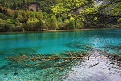 Lac peacock Images libres de droits