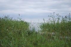 Lac Peipsi Chudskoe de lac, bord de lac herbeux image libre de droits
