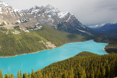 Lac Peyto photographie stock libre de droits
