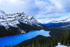Lac Peyto dans Banff, Alberta Image stock