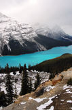 Lac Peyto dans les Rocheuses canadiennes Photos libres de droits