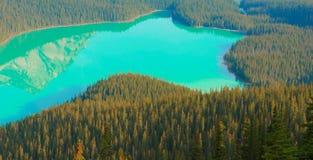 Lac Peyto en stationnement national de Banff Photos stock