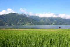 Lac Phewa avec le gisement Pokhara de riz Images stock