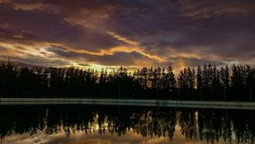 Lac pine Photos libres de droits