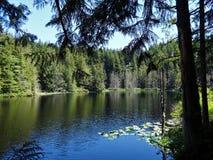 Lac pine en début de l'été sur la montagne de Chuckanut Photo stock