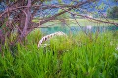 Lac pittoresque Plav dans les montagnes Photo stock
