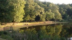 lac près des arbres Photos stock
