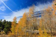 Lac près tombé leaf d'Aspen Image stock