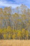 Lac près tombé leaf d'Aspen Photographie stock libre de droits