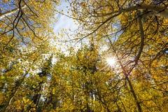 Lac près tombé leaf d'Aspen Images stock