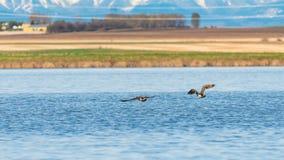 Lac prairie Image libre de droits