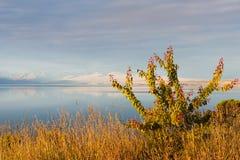 Lac Pukaki au Nouvelle-Zélande Photo libre de droits